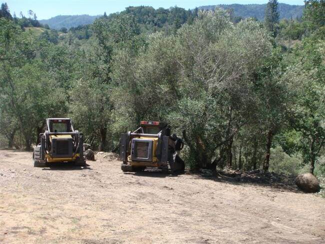 Two tractors transplanting olive trees
